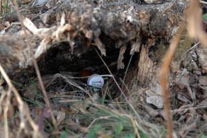 The hidden prize: a container containing cadaver odors.