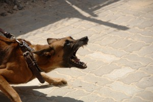 Dogs are the most frequent animals used as weapons.