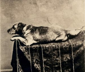 Lincoln's dog Fido